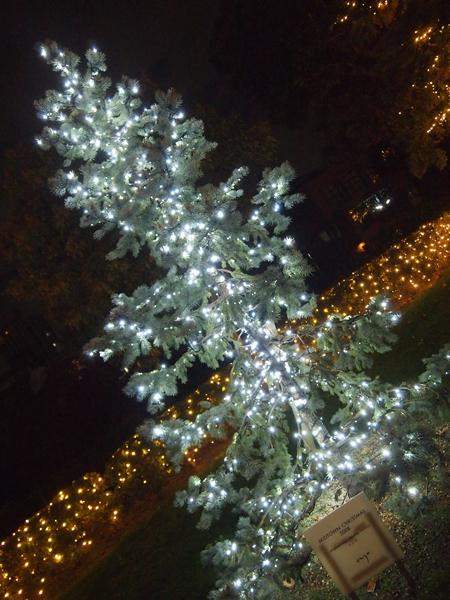 東京ミッドタウンイルミネーション街路樹白い光り