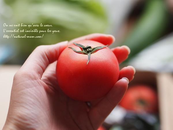 大地を守る会お試しセットのトマト