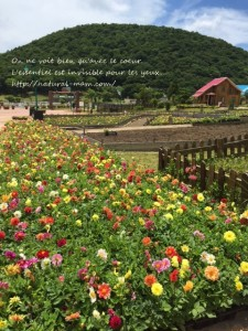 シルバニアヴィレッジの花畑