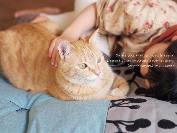 せんべい座布団に猫