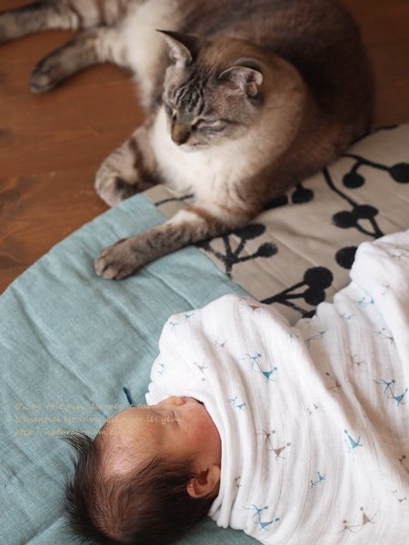 せんべい座布団と赤ちゃんと猫